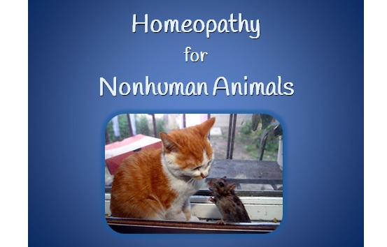 [WEBINAR] Homeopathy for Nonhuman Animals
